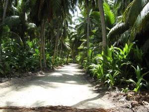 Kokoöarnas
