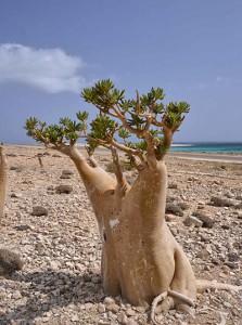 Socotras klimat